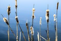 Flores con el mar como fondo imagen de archivo
