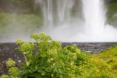 Flores con la cascada Imagen de archivo libre de regalías