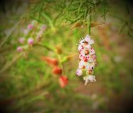 Flores con la hormiga Imagen de archivo libre de regalías