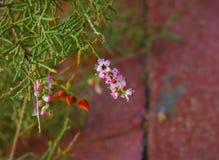 Flores con la hormiga Fotos de archivo libres de regalías