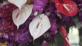 Flores con la mariposa falsa almacen de metraje de vídeo