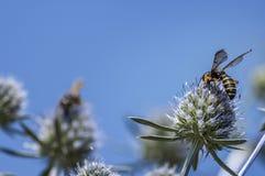 Flores con las abejas Fotos de archivo libres de regalías
