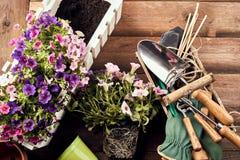 Flores con las herramientas que cultivan un huerto en fondo de madera Fotografía de archivo
