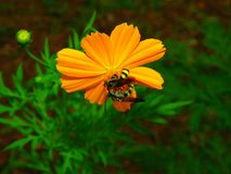 Flores con las pequeñas abejas Fotos de archivo libres de regalías