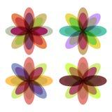 Flores con los pétalos coloridos Foto de archivo libre de regalías