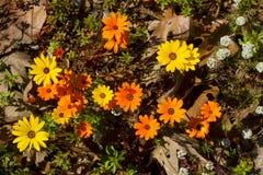 Flores con maleza del bosque imagen de archivo libre de regalías