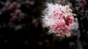 Flores congeladas foto de stock