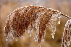 Flores congeladas Fotos de archivo