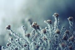 Flores congeladas Fotos de archivo libres de regalías