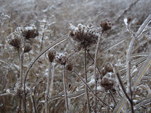Flores congeladas Imágenes de archivo libres de regalías