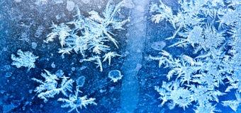 Flores congeladas do gelo Imagem de Stock Royalty Free