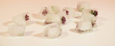 Flores congeladas dos cubos de gelo no vidro Foto de Stock