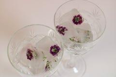 Flores congeladas dos cubos de gelo no vidro Foto de Stock Royalty Free