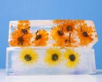 Flores congeladas en bloque de hielo Foto de archivo libre de regalías