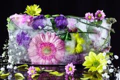 Flores congeladas en hielo en un fondo oscuro Foto de archivo libre de regalías