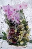 Flores congeladas Kiev, Ucrânia Fotos de Stock