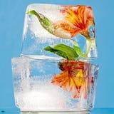 Flores congeladas no bloco de gelo Fotografia de Stock Royalty Free