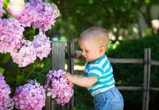 Flores conmovedoras de la hortensia del bebé lindo Imagen de archivo libre de regalías