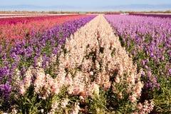 Flores conservadas em estoque Foto de Stock
