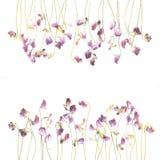 Flores consideravelmente violetas da ervilha doce da aquarela Foto de Stock Royalty Free