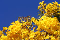 Flores Contorted del sauce Imagenes de archivo