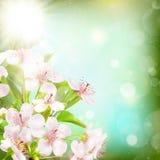 Flores contra um fundo azul Eps 10 Fotos de Stock Royalty Free