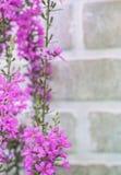 Flores cor-de-rosa Imagens de Stock