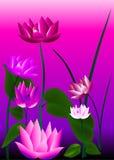 Flores cor-de-rosa Ilustração Royalty Free
