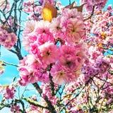 Flores cor-de-rosa fotografia de stock royalty free