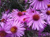 Flores cor-de-rosa fotos de stock
