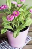Flores cor-de-rosa artificiais bonitas no potenciômetro cor-de-rosa Fotos de Stock Royalty Free