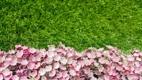 Flores cor-de-rosa artificiais do fundo decorativo em uma parede da grama Fotografia de Stock Royalty Free
