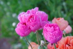 Flores cor-de-rosa bonitas imagem de stock