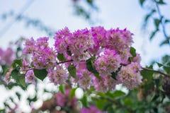 Flores cor-de-rosa bonitas com as folhas verdes contra fotografia de stock royalty free