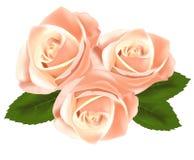 Flores cor-de-rosa bonitas com folhas. Imagens de Stock Royalty Free
