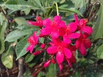 Flores cor-de-rosa bonitas com folhas verdes Fotografia de Stock