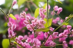 Flores cor-de-rosa bonitas da flor Foto de Stock