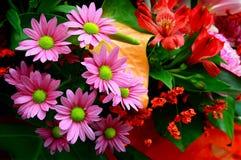 Flores cor-de-rosa bonitas da margarida foto de stock royalty free
