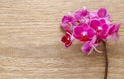 Flores cor-de-rosa bonitas da orquídea na madeira Foto de Stock