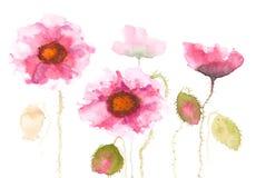 Flores cor-de-rosa bonitas da papoila Fotografia de Stock Royalty Free