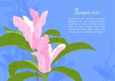 Flores cor-de-rosa bonitas do Magnolia Imagem de Stock