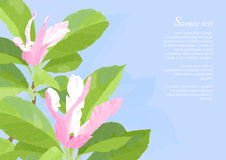 Flores cor-de-rosa bonitas do Magnolia Fotografia de Stock