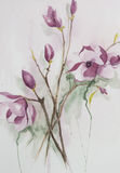 Flores cor-de-rosa bonitas do Magnolia Imagens de Stock
