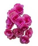 Flores cor-de-rosa bonitas do ramalhete Fotos de Stock