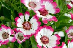 Flores cor-de-rosa bonitas e grama verde fotos de stock royalty free