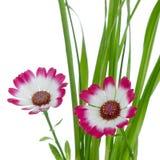 Flores cor-de-rosa bonitas e verde Fotos de Stock Royalty Free