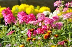 Flores cor-de-rosa bonitas em uma haste Foto de Stock