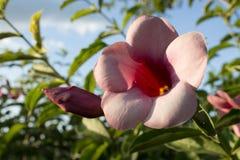 Flores cor-de-rosa bonitas no parque imagens de stock royalty free