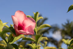 Flores cor-de-rosa bonitas no parque foto de stock