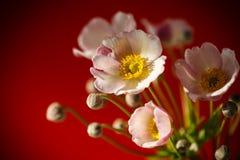 Flores cor-de-rosa bonitos em um fundo vermelho Imagem de Stock Royalty Free